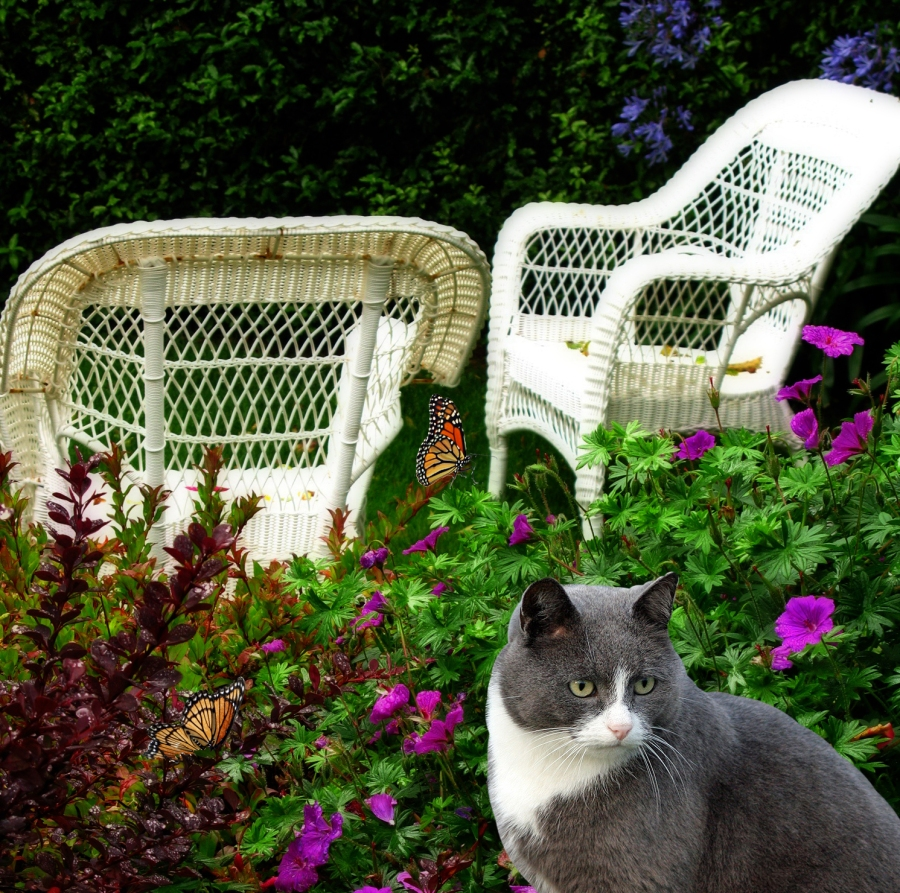 Cat and butterflies in the garden
