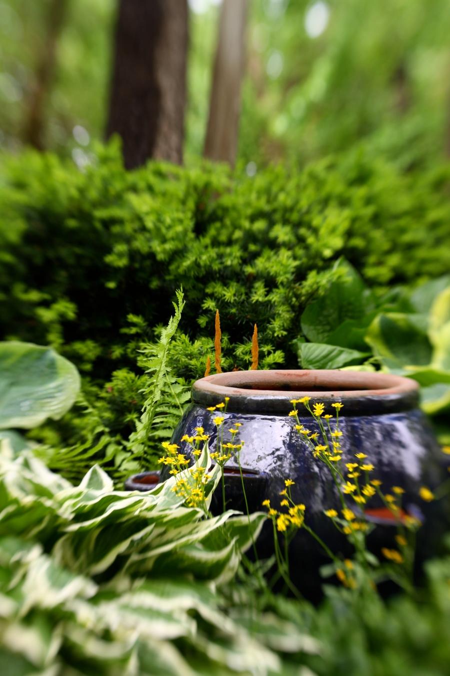 spring garden 223