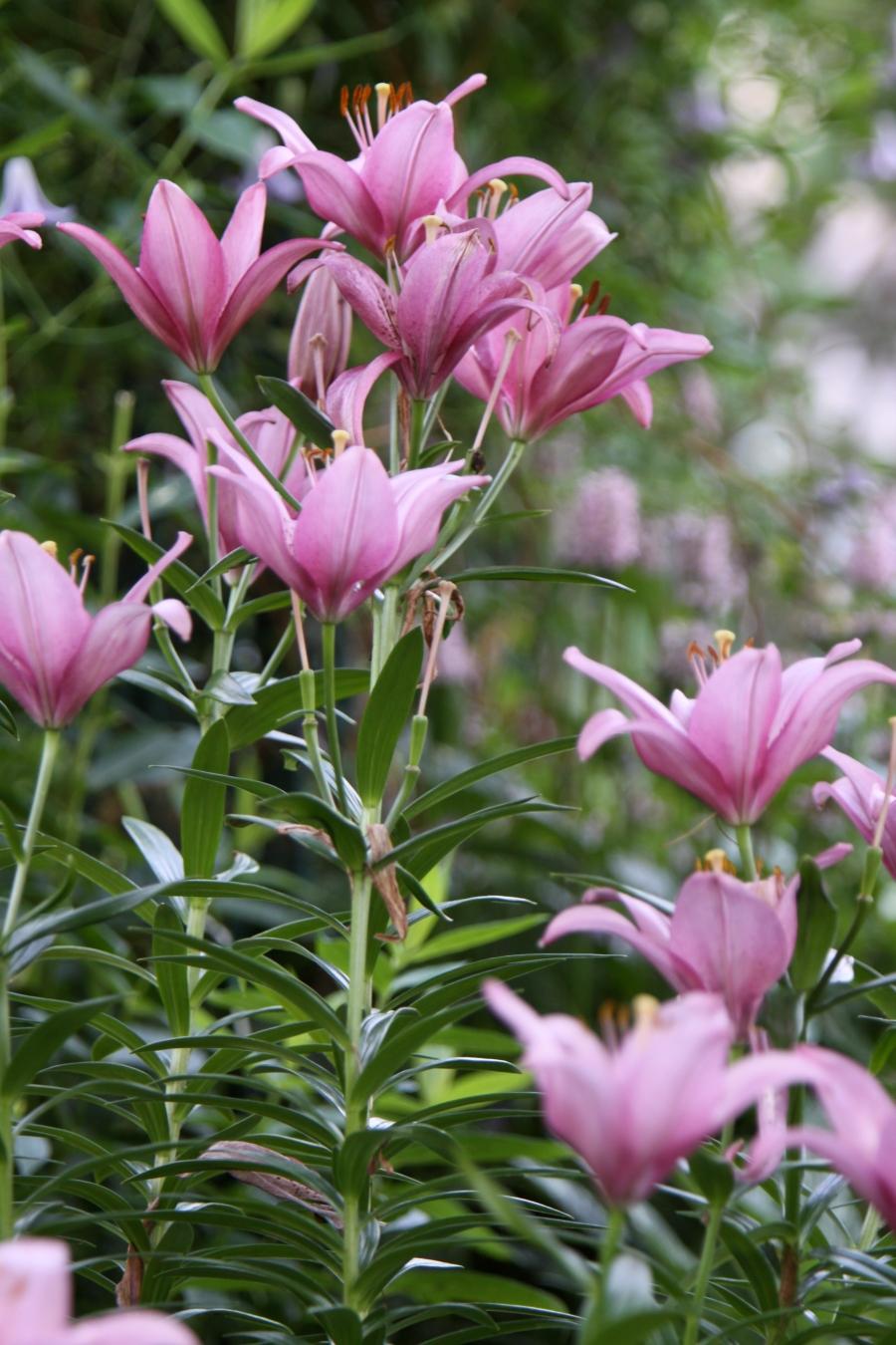 spring garden 415