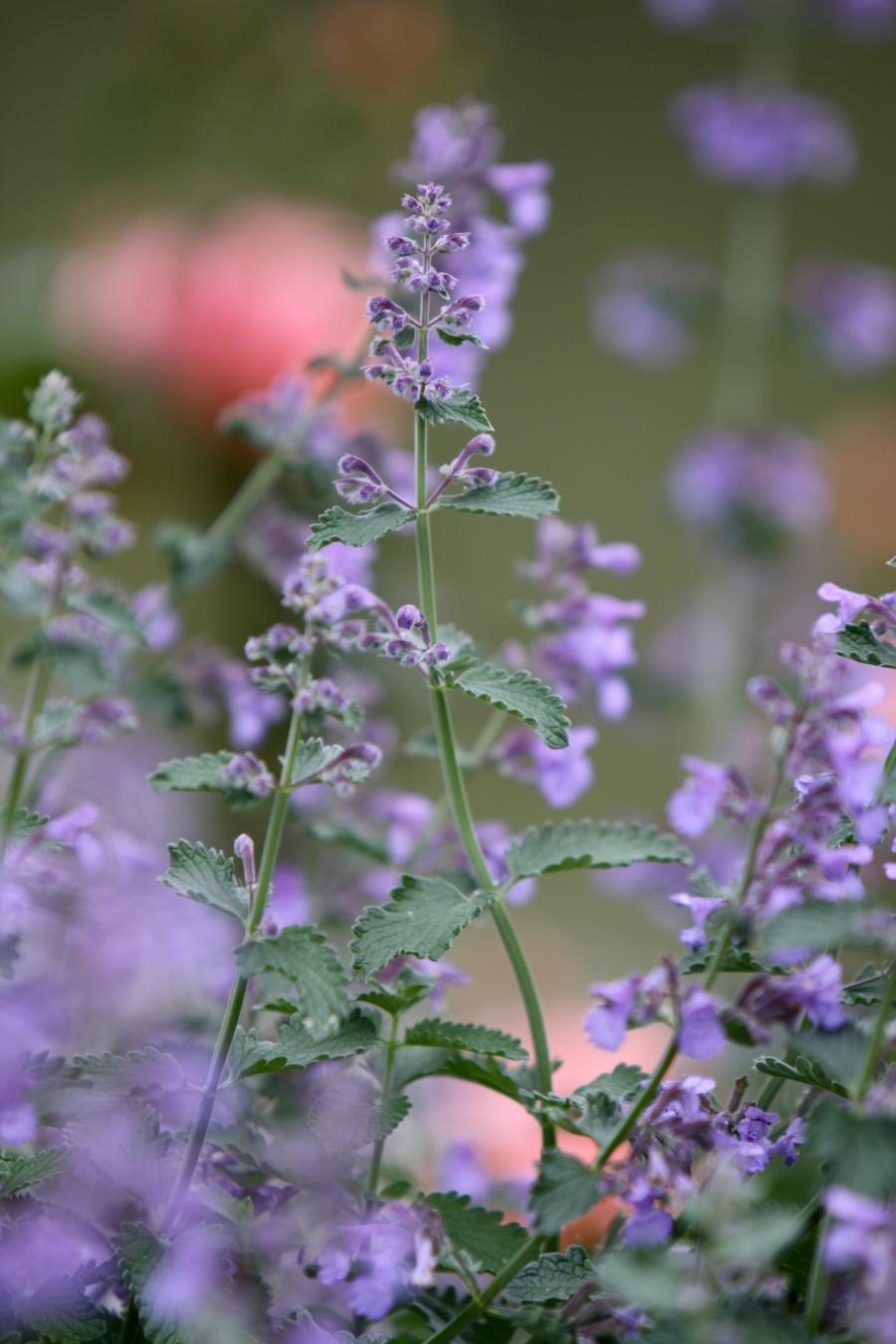 spring garden 299