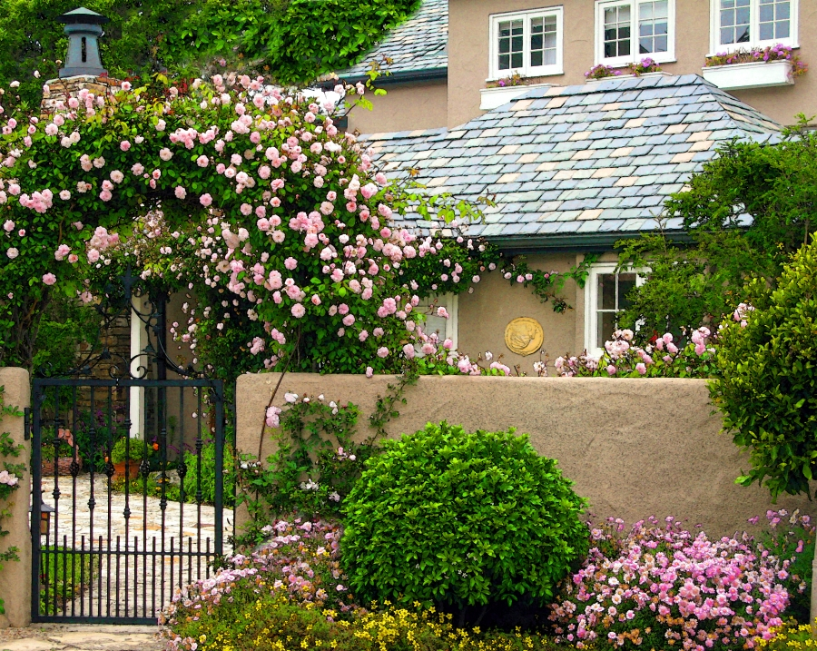 IMG_0179house of roses